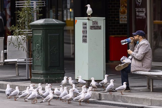 Seagulls gather around a person sitting for a snack along Elizabeth Street in Melbourne, Sunday, September 12, 2021. Victoria reported 392 new locally acquired COVID-19 cases, with 107 infections linked to current outbreaks and 285 still under investigati