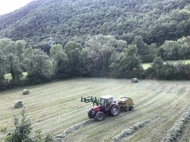 Un tractor recoge pacas de hierba