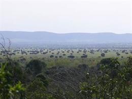 Dehesas del Parque Nacional de Cabañeros .