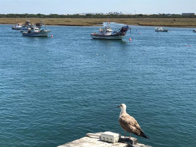Archivo - Barco pesquero. Punta Umbría.