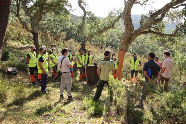 Formación de corcheros en el Parque de Los Alcornocales.