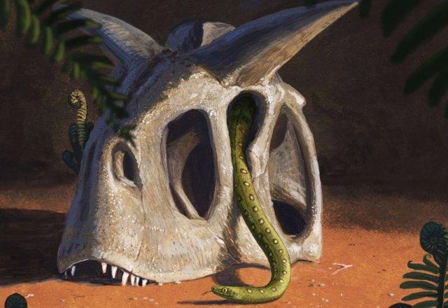 Todas las serpientes vivientes evolucionaron a partir de un puñado de especies que sobrevivieron al impacto de un asteroide gigante que acabó con los dinosaurios y la mayoría de los seres vivos al final del Cretácico.