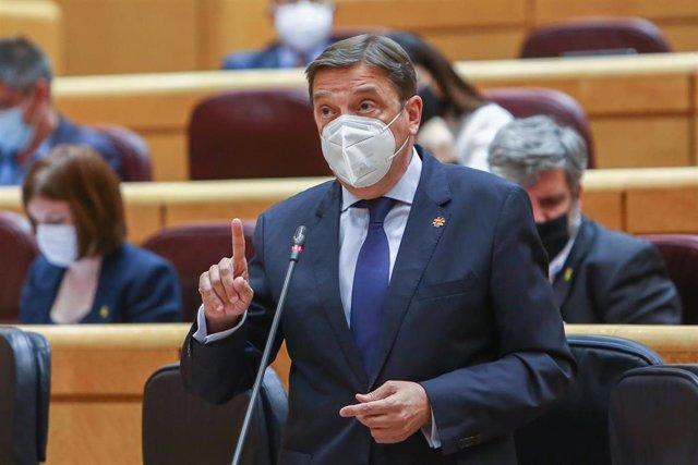 Archivo - El ministro de Agricultura, Pesca y Alimentación, Luis Planas, interviene en una sesión de control al Gobierno en el Senado