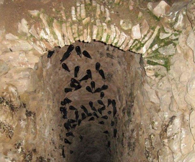 Chovas en una cueva