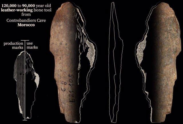 Una herramienta de hueso de la cueva de Contrebandiers, Marruecos, que se utilizó para trabajar el cuero hace 120.000 a 90.000 años.