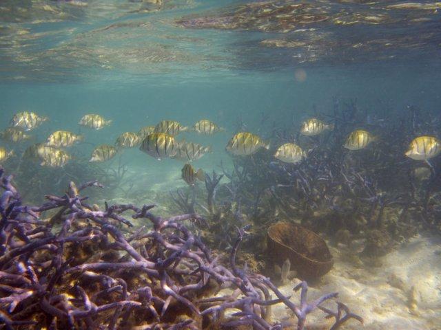 Archivo - Banco de peces se mueve por un arrecife de coral