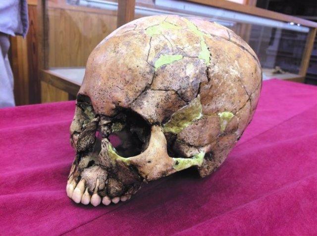 Un cráneo humano de Jomon del que se extrajo el ADN humano.
