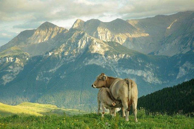 """PROVACUNO defiende un sistema alimentario """"sostenible"""