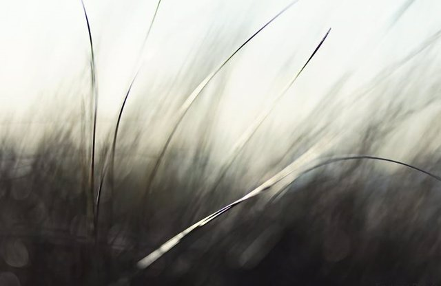 Hierba agitada por el viento