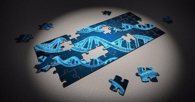 Archivo - ADN, Gen, Genoma