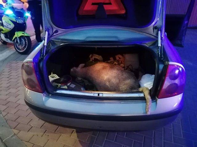 Imagen de la oveja interceptada en el maletero del coche
