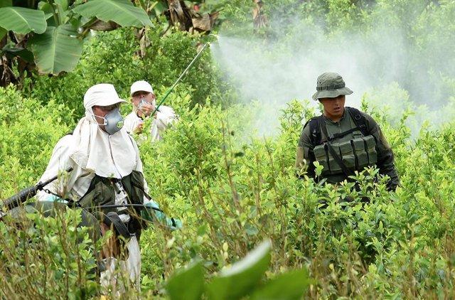 Archivo - Imagen de archivo de una plantación de coca en Colombia