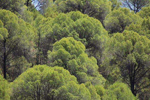Bosque, ayudas forestales (recurso)