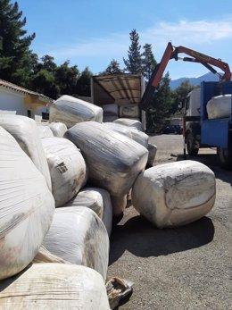 Ensilado, comida para ganado afectado por el incendio en Sierra Bermeja y donado por el Ayuntamiento de El Ejido y Frutilados del Poniente, de Almería
