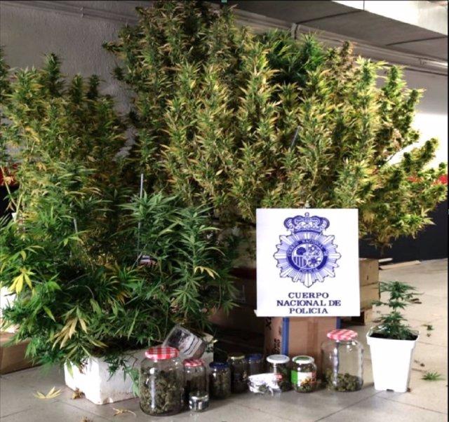 Detenido un varón que cultivaba marihuana en las zonas comunitarias de un edificio de Cuenca