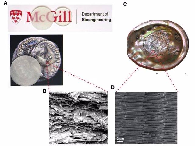 (A) Compuesto de vidrio) (B) Microestructura del compuesto de vidrio, (C) Vista de la capa nacarada en la concha de abulón rojo y (D) Microestructura de nácar