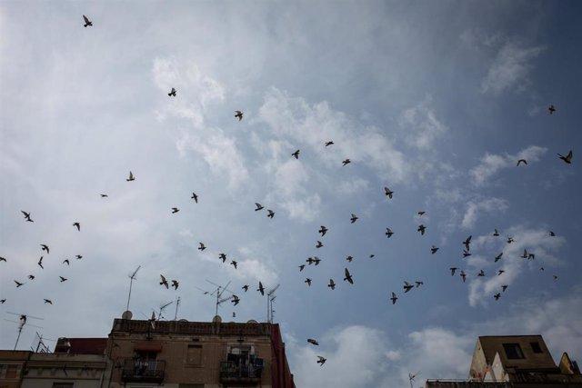 Archivo - Decenas de pájaros volando
