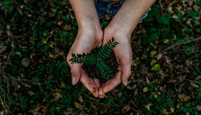 Archivo - La Fundación Biodiversidad destinará 9,4 millones a proyectos de formación e inserción laboral para desempleados