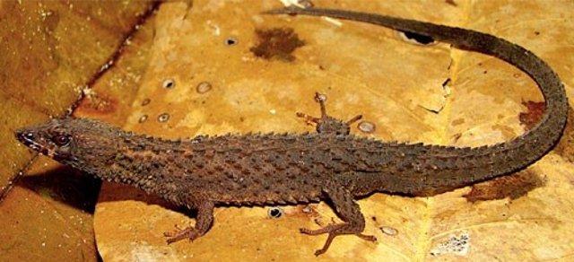 Archivo - Ejemplar de 'Kataphraktosaurus ungerhamiltoni' a partir del cual se ha descrito la especie