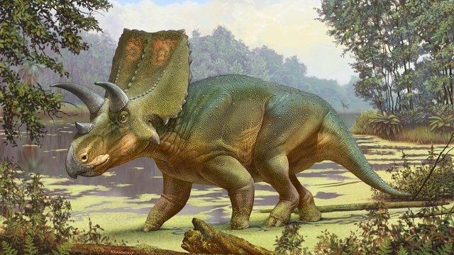 Sierraceratops es anterior a su relativo Triceratops y mide alrededor de cinco metros de largo.