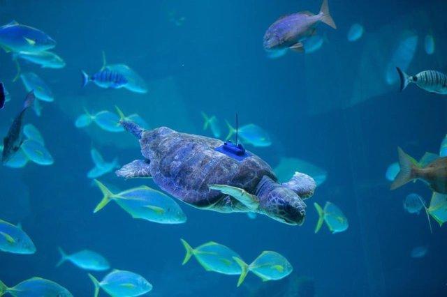 Poema del Mar devuelve al océano a una tortuga