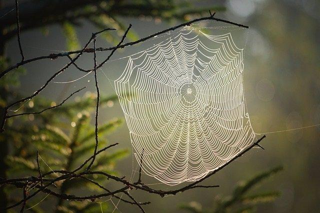 Archivo - Tela de araña.