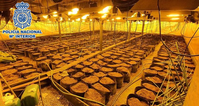 Imatge de part de la plantació de marihuana a la nau industrial