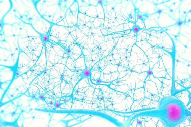 Archivo - Ilustración en 3D de neuronas en el cerebro