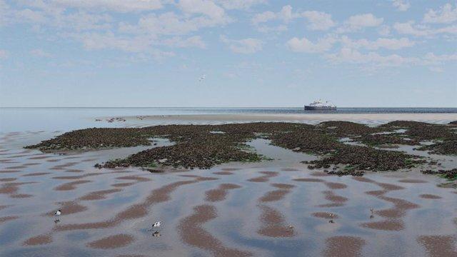Formación de patrones espaciales de mejillones y diatomeas en una planicie de marea. Esta formación de patrones permite eludir los puntos de inflexión causados por el aumento del nivel del mar, de modo que las planicies de marea no se ahoguen.