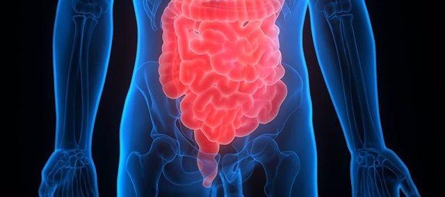 Archivo - Intestino y colon
