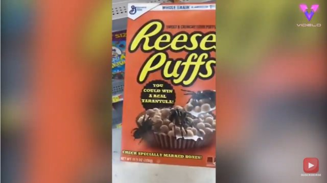 Esta caja de cereales contiene una sorpresa de ocho patas escondida como parte de una terrorífica broma