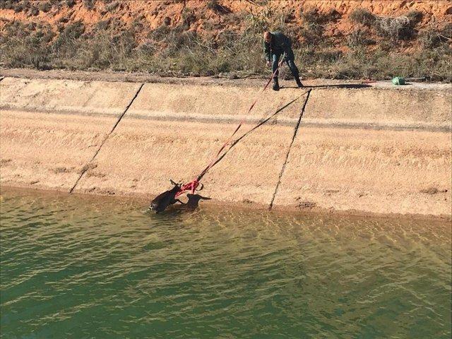 Los cazadores denuncian al presidente de la CH Tajo ante la Fiscalía de Medio Ambiente por su inacción para evitar ahogamientos de animales en los canales del trasvase Tajo-Segura.